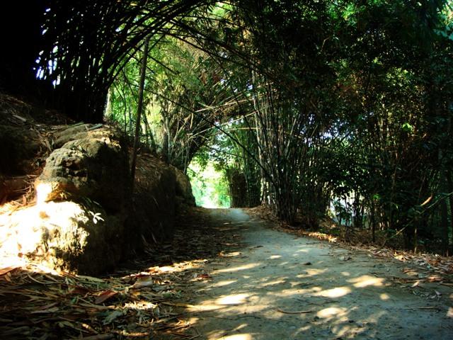 Hutan bambu tempat titik lampu ke-3
